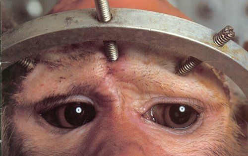 animal testing cruelty pictures. We can help stop great cruelty